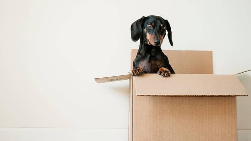 Költöztető doboz – válasszon webshopunkból, házhoz visszük!